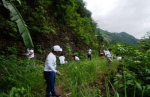 SPI, CAMMITA plant 100 seedlings